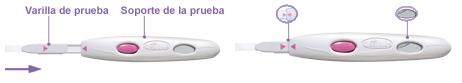 Prepara la prueba de ovulacion